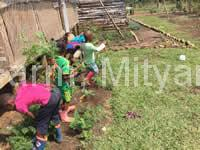 bobo_eco_children-harvesting-carrots