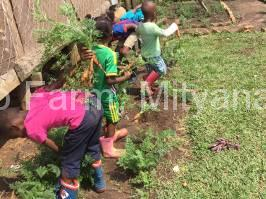 children-harvesting-carrots