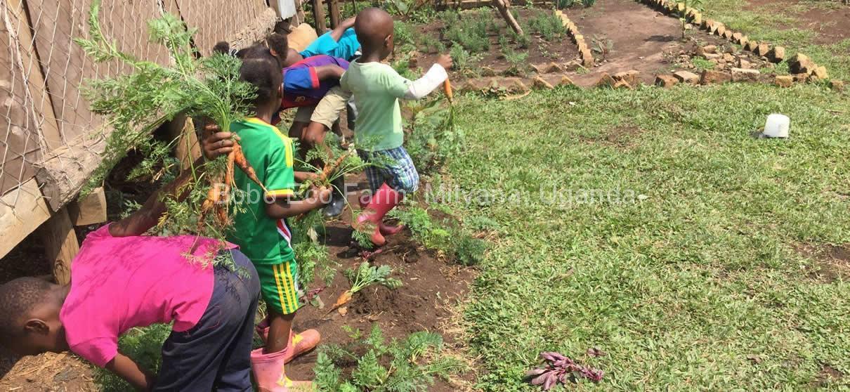 children-harvesting-carrots