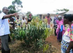 the-community-learns-how-to-grow-mangoes