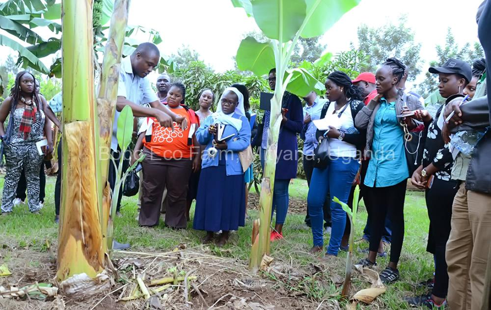Master of Development Studies students on a study tour at Bobo Eco Farm4
